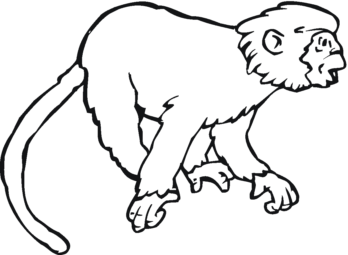 1200x879 New Monkey Animal Coloring Pages Collection Printable Coloring Sheet