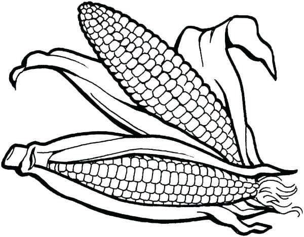 Indian Corn Coloring Page At Getdrawings Com Free For Personal Use