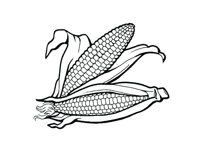 700x500 Indian Corn Coloring Page Corn Coloring Sheets Indian Corn