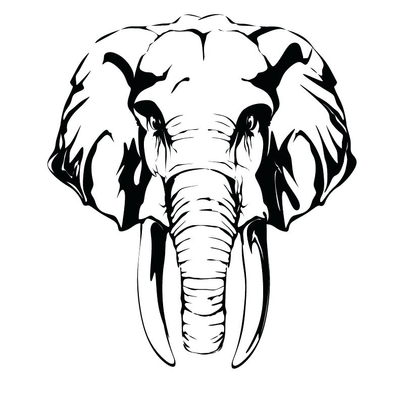 800x800 Elephant Head Coloring Page Elephant Color Page Cute Baby Elephant