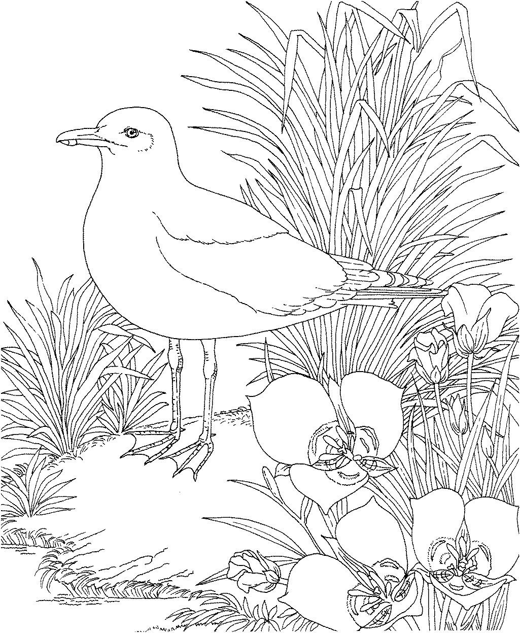 Indiana Coloring Page