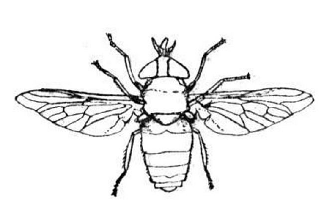 650x413 Insect Coloring Pages