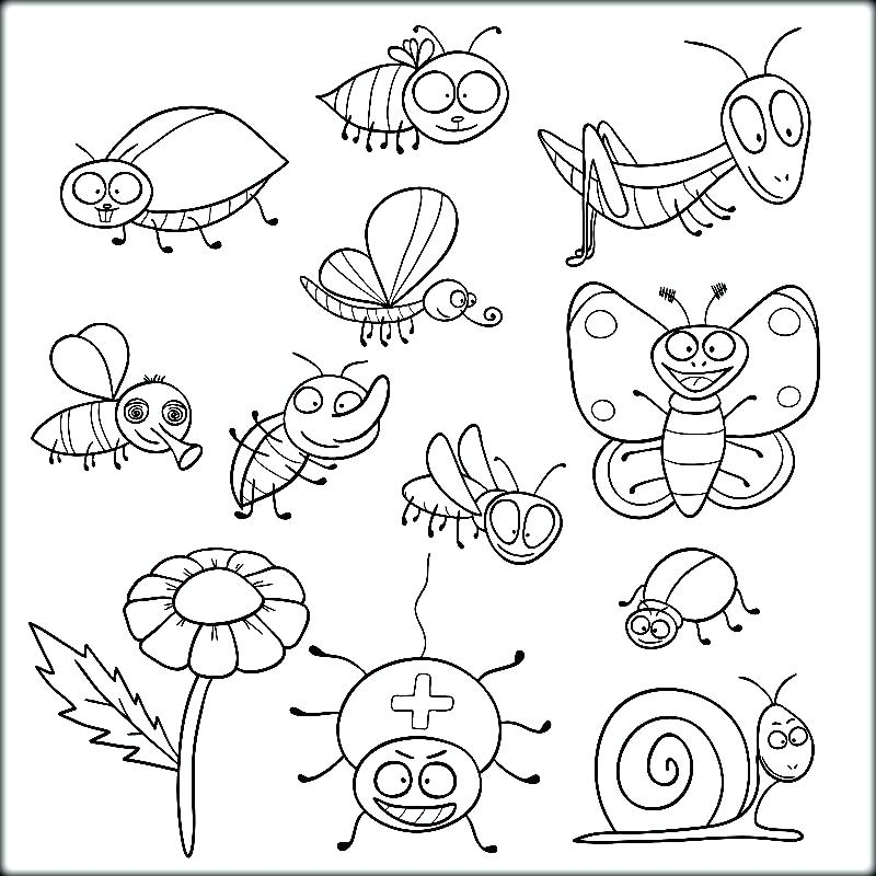800x800 Insect Coloring Pages Insects Coloring Pages To Print Out Kids
