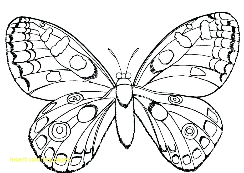 1024x727 Insect Lessons For Kindergarten Kids Coloring Insect Coloring