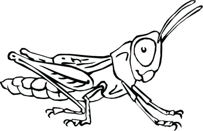 660x427 Insects Coloring Pages Printable Insect Coloring Pages Printable
