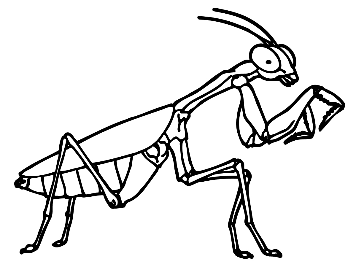 1200x900 Startling Insect Coloring Pages Top Free Pa
