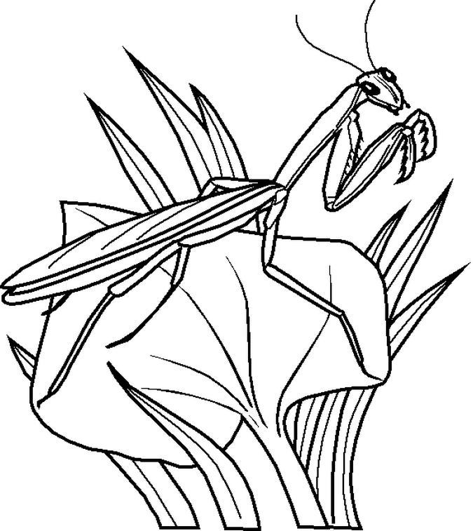 675x757 Top Insect Coloring Pages