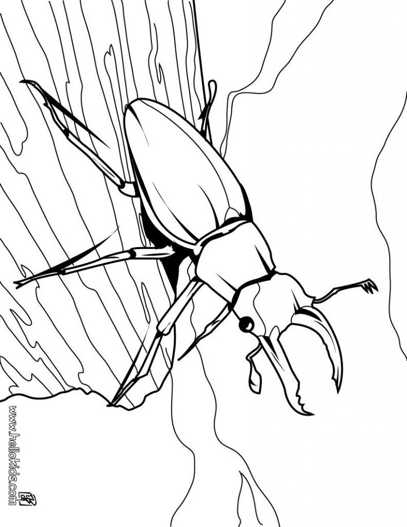 792x1024 Valentine Love Bug Coloring Pages For Kids Gobel Page At Diaet