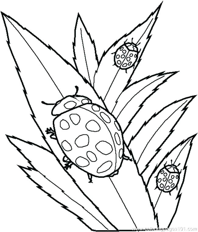 650x761 Free Printable Insect Coloring Pages Coloring Pictures Of Insects