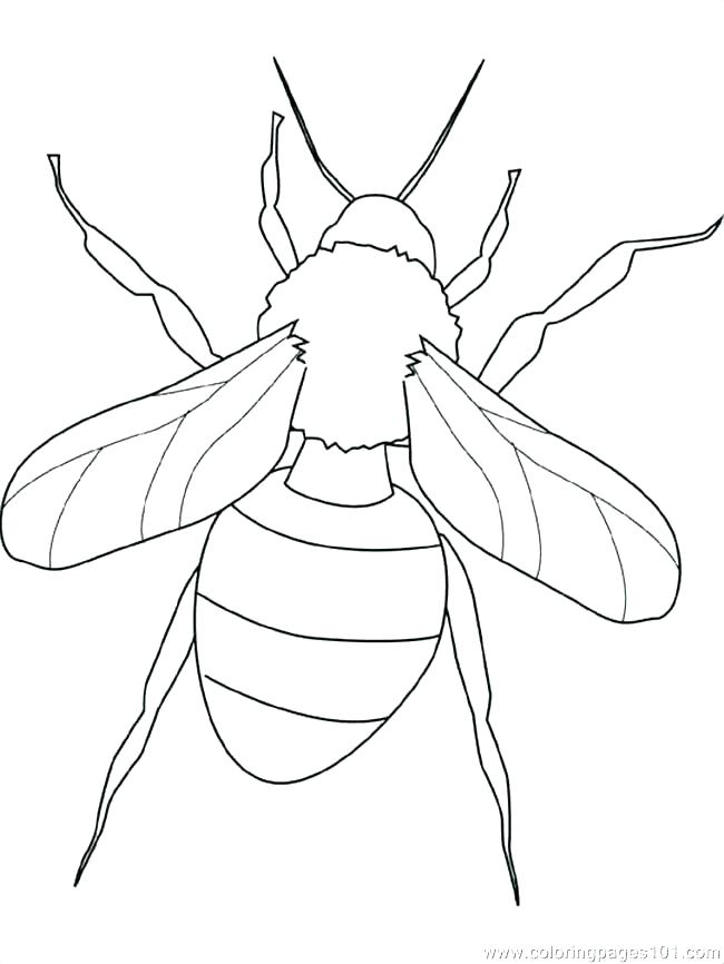 650x866 Coloring Pages Of Insects Coloring Pages Insects Coloring Pages