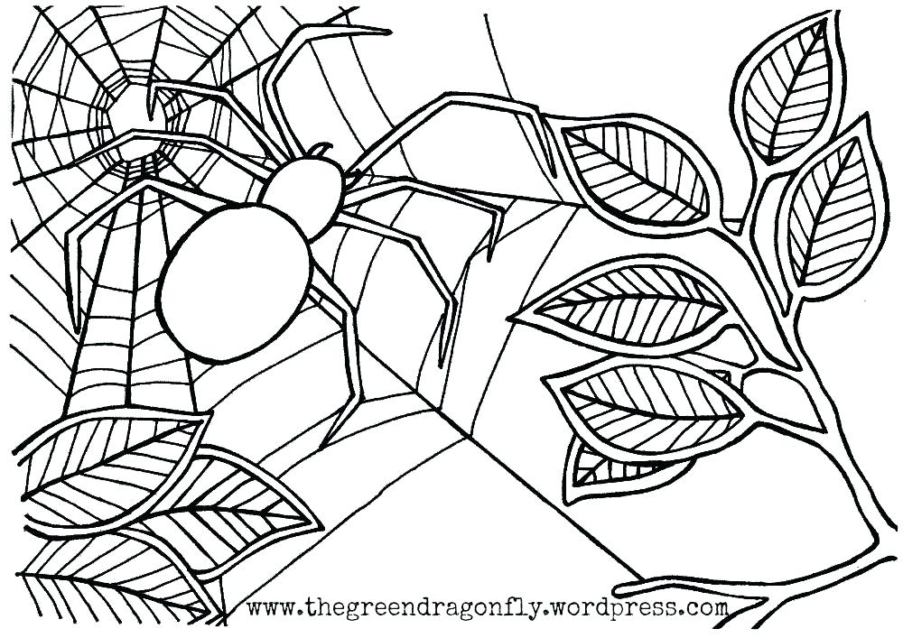 1000x707 Interesting Coloring Page Spider Spider Color Page Spider Web