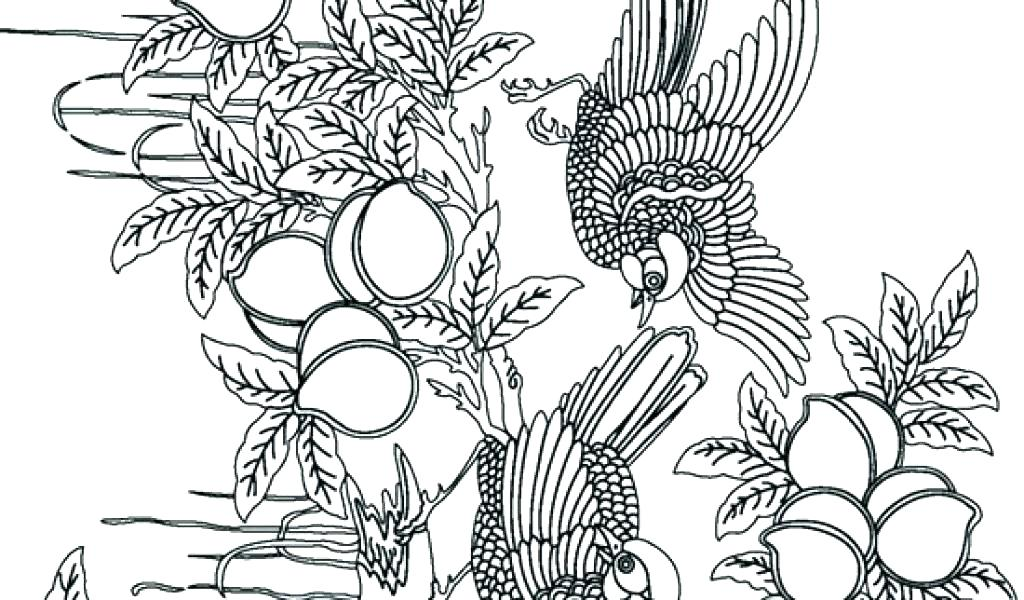 1024x600 Free Printable Advanced Coloring Pages Free Printable Intermediate
