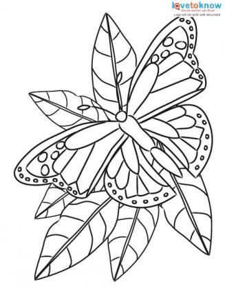 327x425 Butterfly Coloring Pages