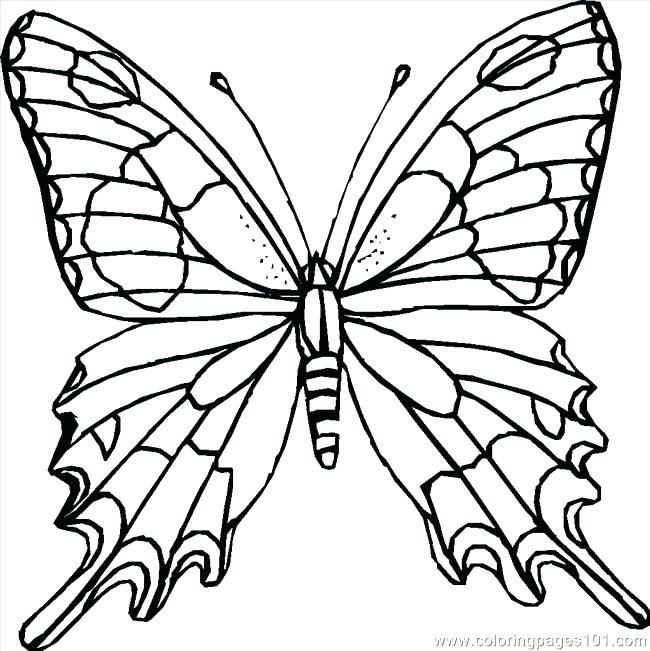 650x651 Detailed Coloring Page Butterfly Printable Coloring Pages