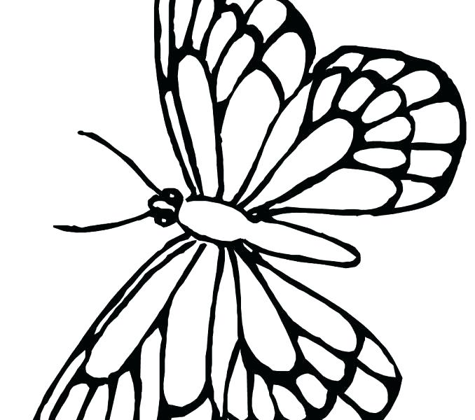 678x600 Free Printable Monarch Butterfly Coloring Pages Page Together