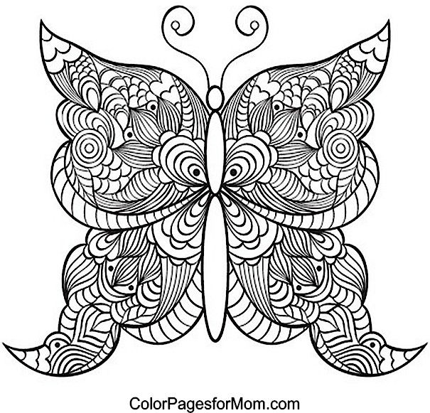 605x581 Intricate Butterfly Coloring Pages Butterfly Coloring Page