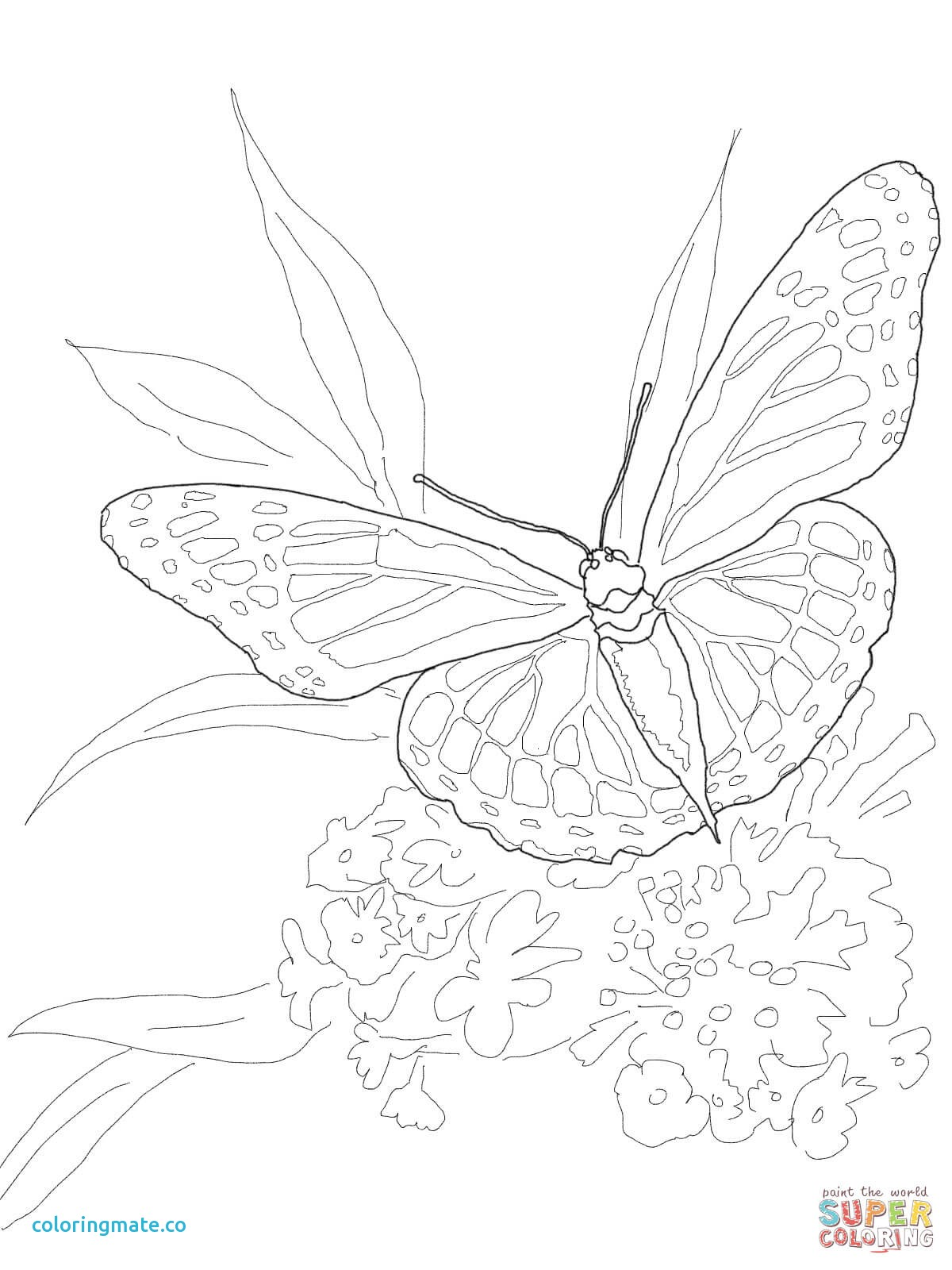 1200x1600 Ulysses Butterfly Coloring Page Images Butterflies Lovers Adult