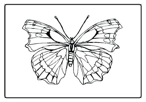 476x333 Butterfly Coloring Pages Print