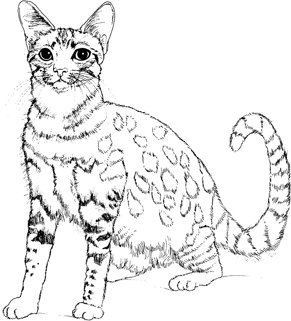 1002x1105 New Category Coloring Pages Cats Page Free Coloring Pages
