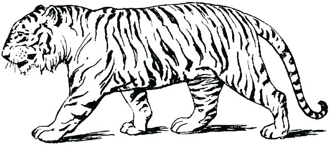 671x296 Tiger Coloring Pages Intricate Cat Coloring Pages For Adults Tiger