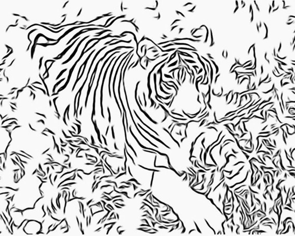1000x800 Adult Coloring Pages Intricate More Free Big Cat Coloring Pages
