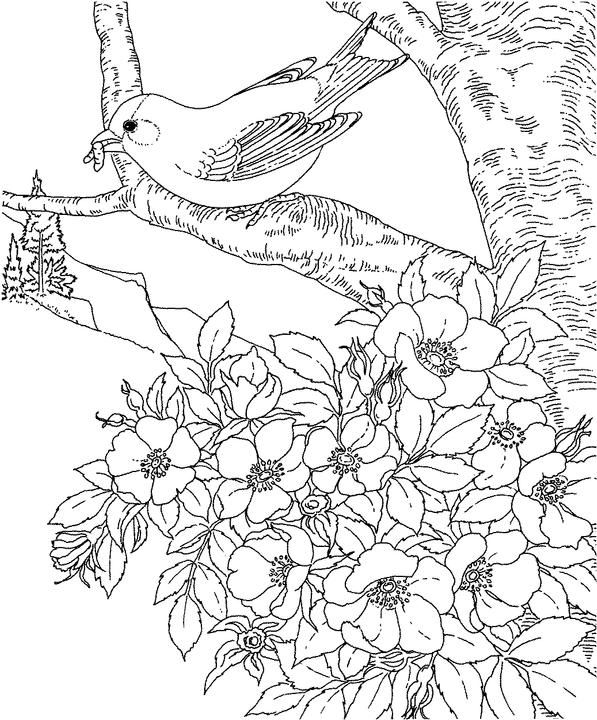 597x720 Iowa Eastern Goldfinch Coloring Page Purple Kitty Coloring