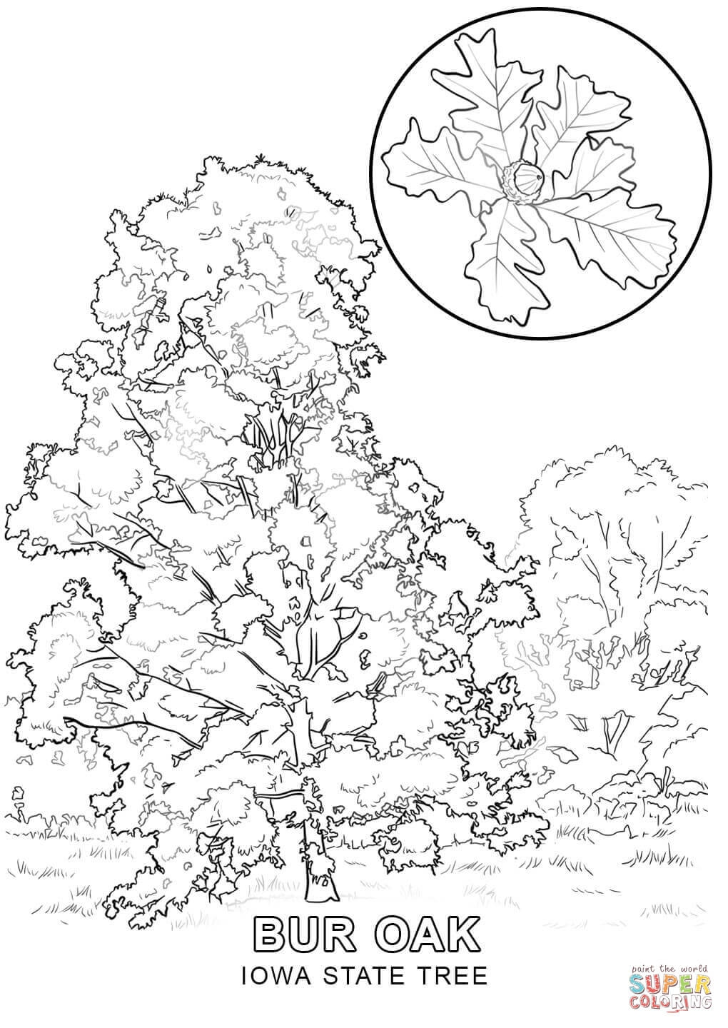 1020x1440 Iowa State Coloring Pages Printable Coloring For Kids