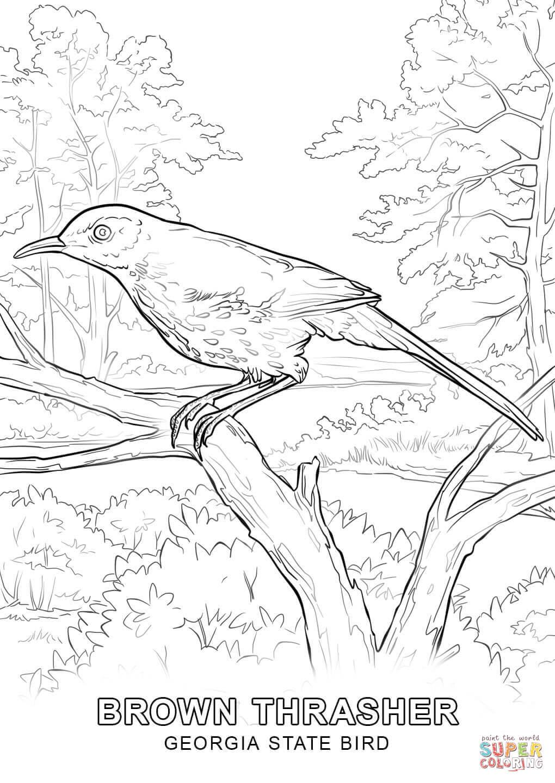 1020x1440 Proven Iowa State Bird Coloring Page Free Prin