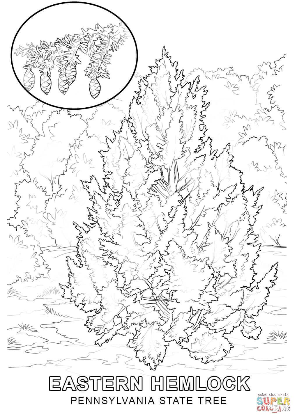 1020x1440 Shocking Virginia State Tree Coloring Page Flower Grigorg Of Iowa