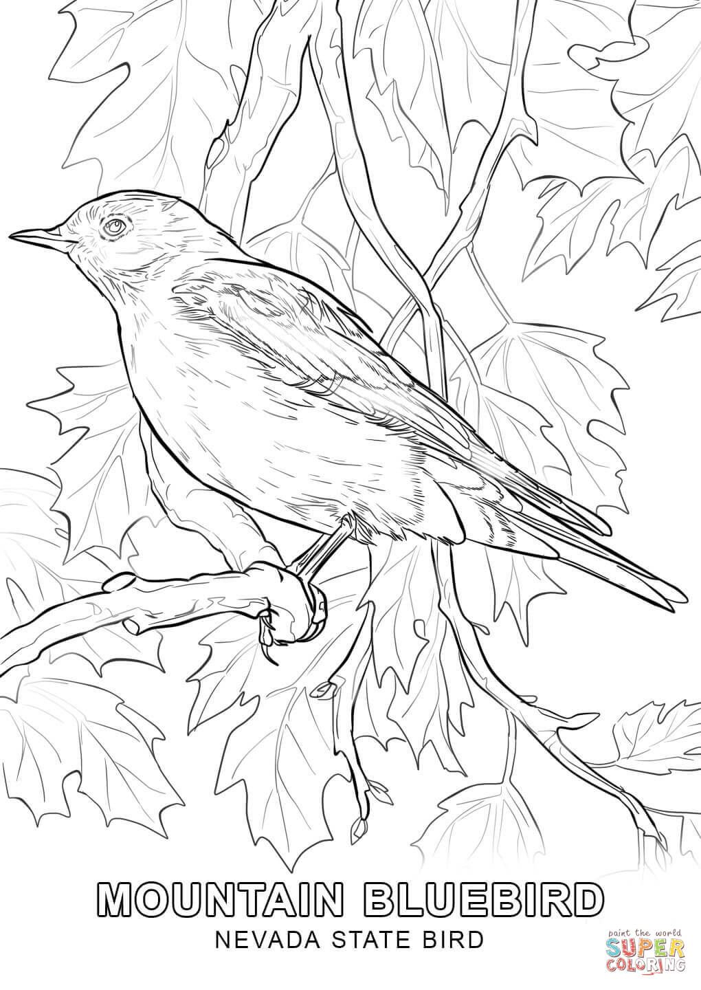 1020x1440 Unusual Iowa State Bird Coloring Page Pages Google Search