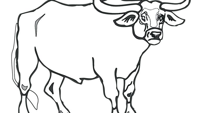 770x430 Sumptuous Design Bull Coloring Page Bull Coloring Pages Android