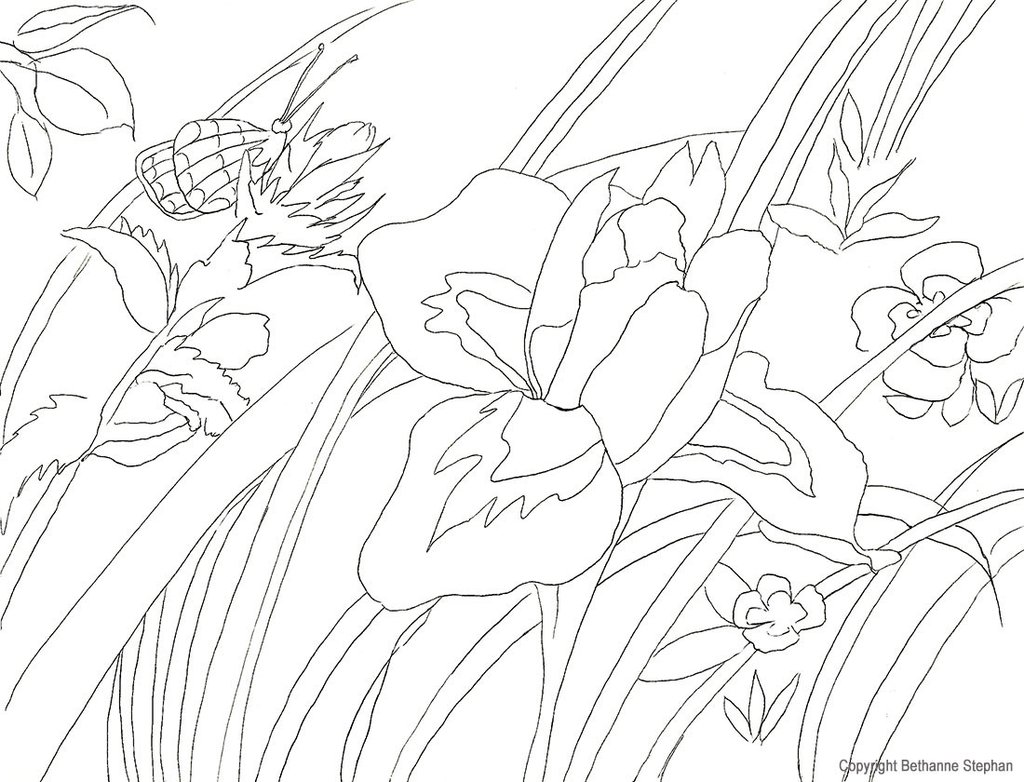1024x782 Coloring Pages Natural Artist