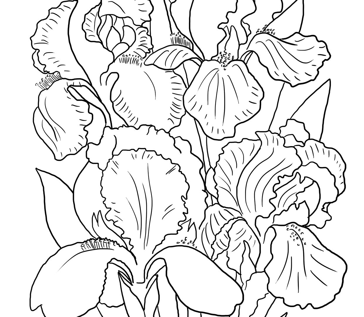 1240x1080 High Quality Free Iris Flowers Coloring Pages For Kids Fantastic