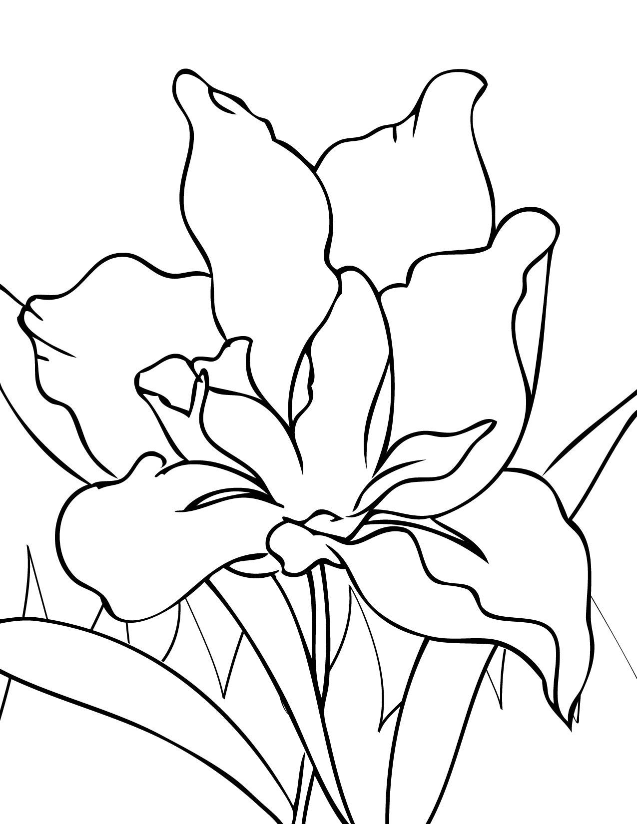 1275x1650 Iris Coloring Page