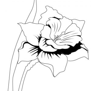 300x300 Pokemon Iris Coloring Pages Best Of Iris Flower Coloring Page Many