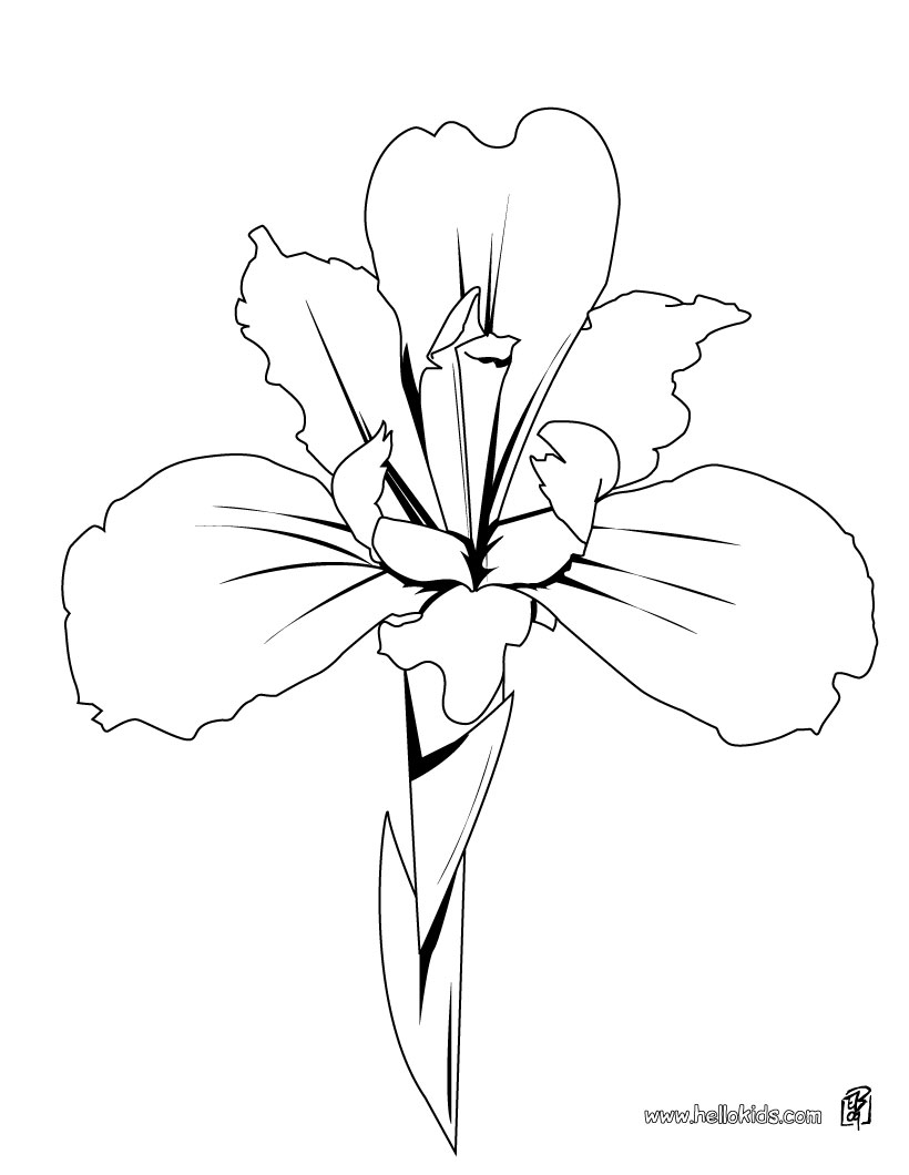 820x1060 Flower Page Printable Coloring Sheets Iris Coloring Pages