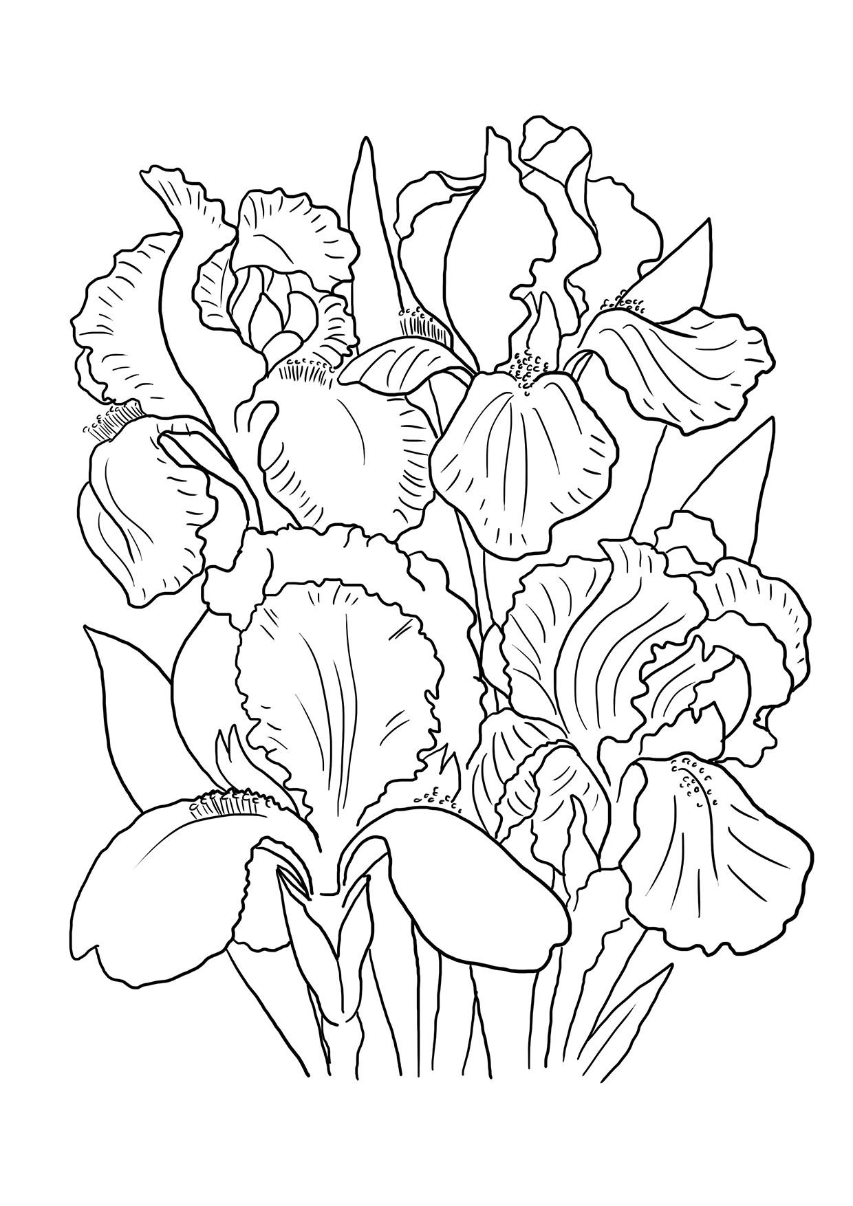 1240x1754 Big Iris Flower Coloring Page Irises Super Drawings