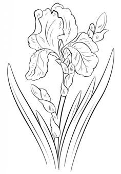 236x340 Blue Iris Coloring Page From Iris Category Select