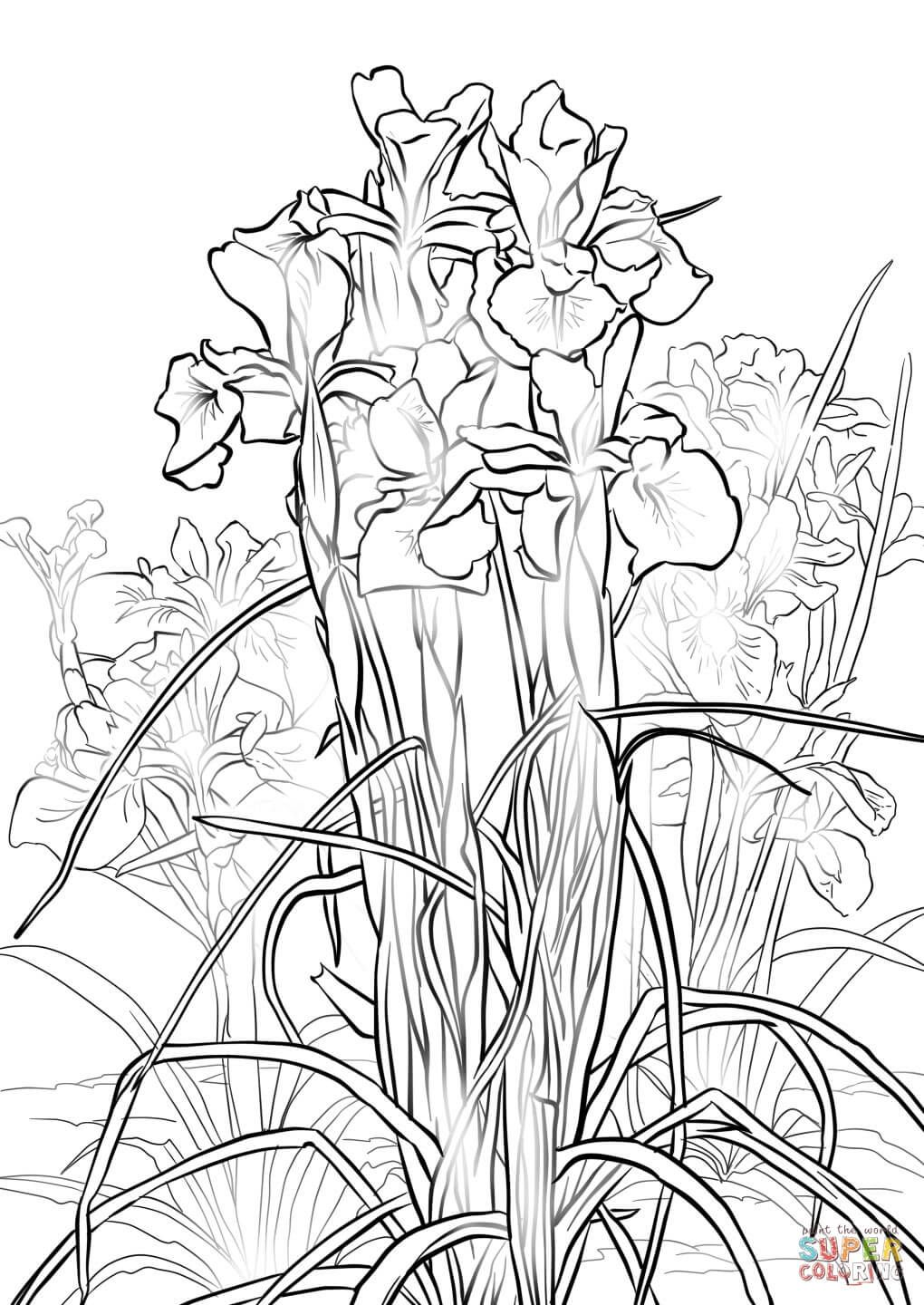 1020x1440 Coloring English Iris Coloring Page Free Printable Pages On Iris