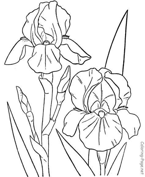 474x580 Flower Coloring Pages Flower Coloring Pages