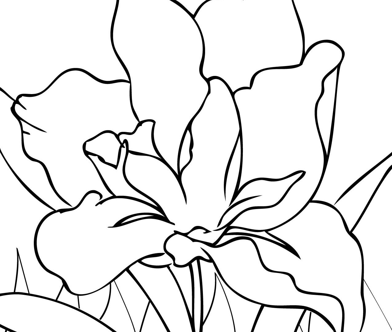 1275x1080 Free Adult Floral Coloring Page Inside Iris Pages Download