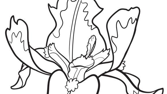 580x326 Iris