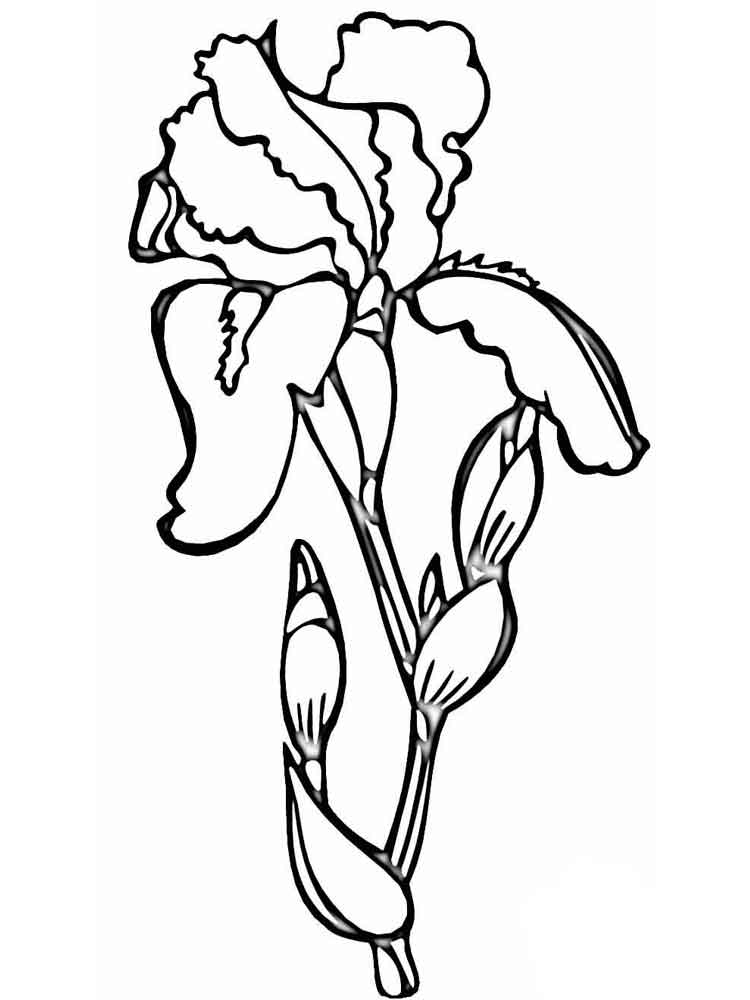 750x1000 Iris Flower Coloring Page