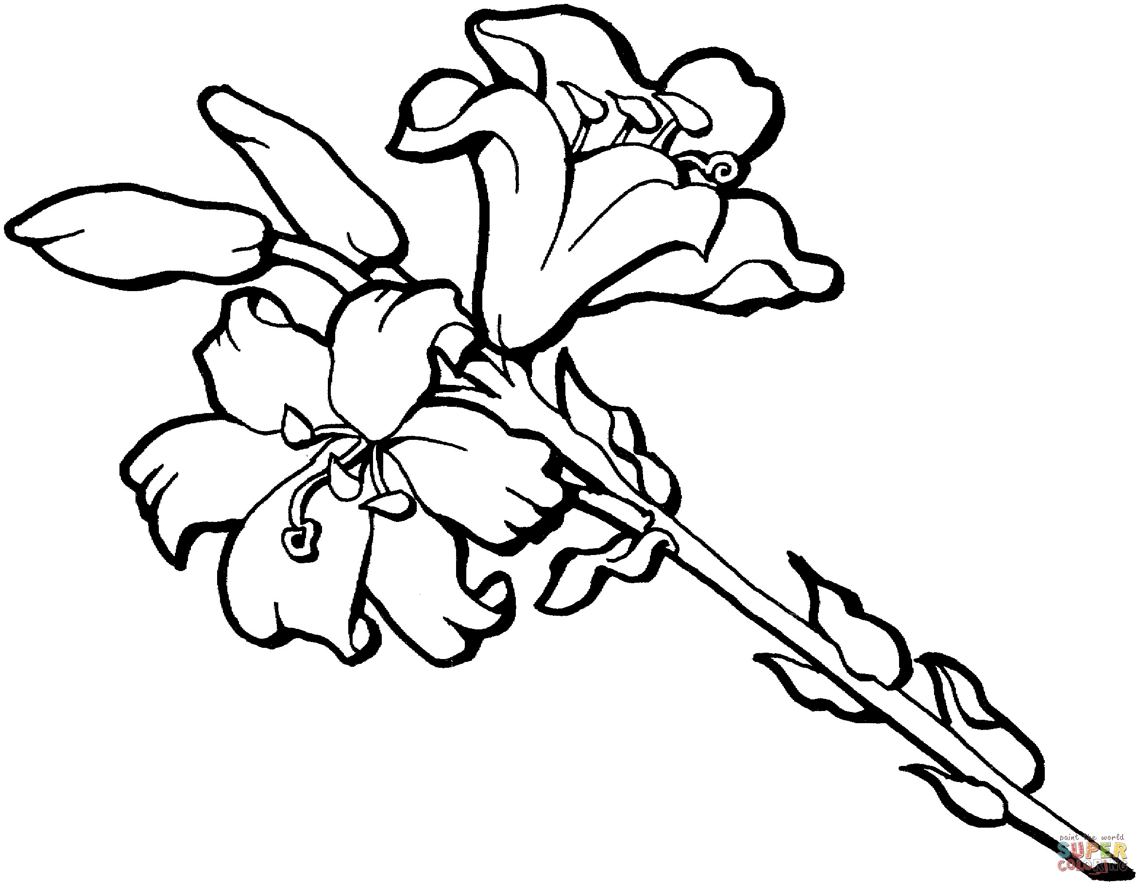 2345x1821 Best Of Iris Flower Coloring Pages Gallery Printable Coloring Sheet