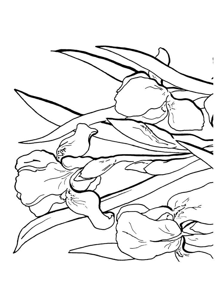 750x1000 Iris Flower Coloring Pages Download And Print Iris Flower