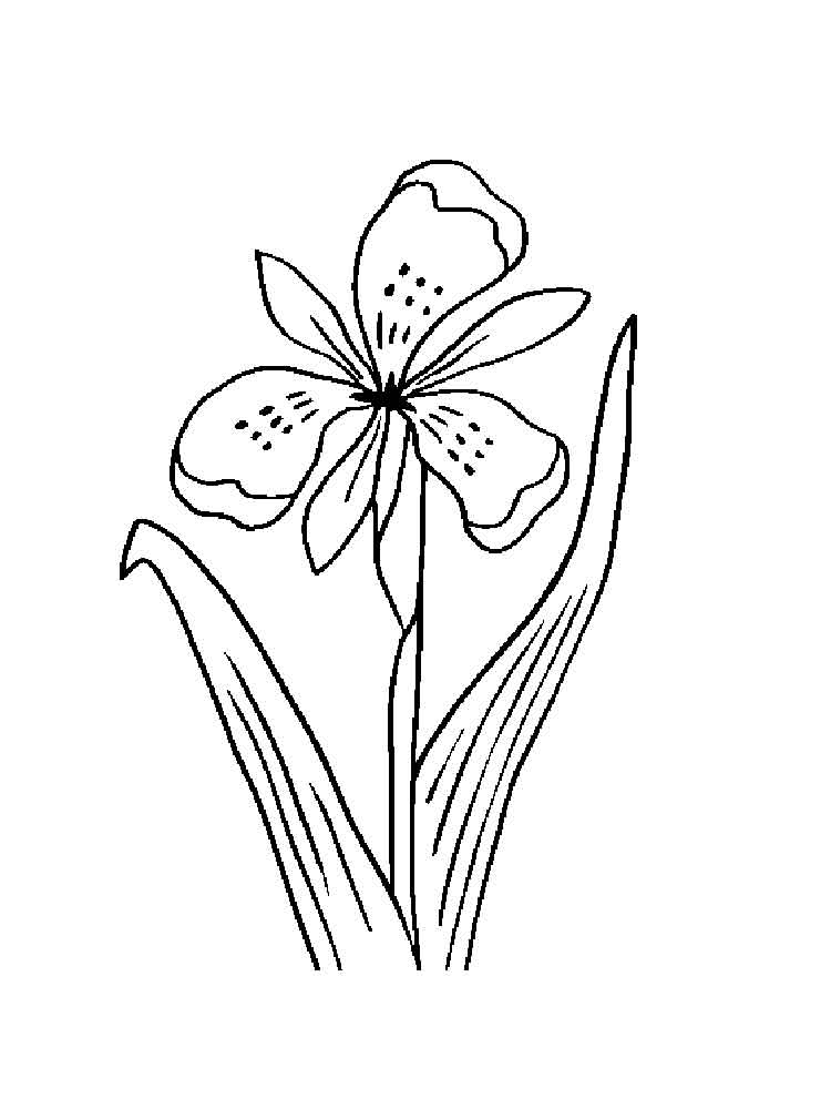 750x1000 Iris Flower Coloring Pages