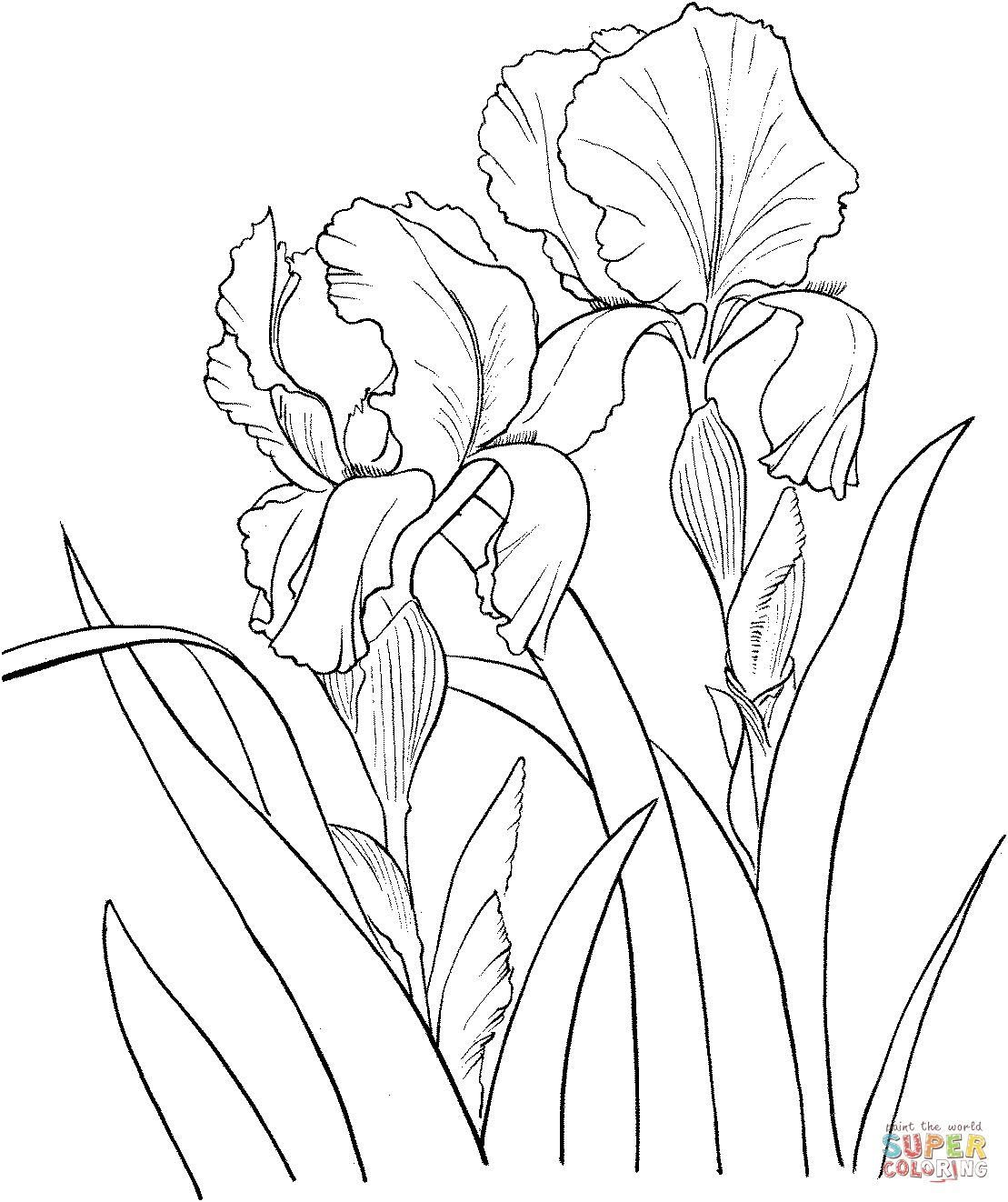 1109x1322 Limited Iris Flower Coloring Page Fascinating