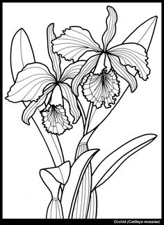 236x323 Tennessee State Flower Iris Coloring Page Teaching Units