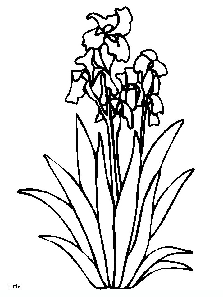 718x957 Flowers Flowers Coloring Pages Coloring Pages For Adults
