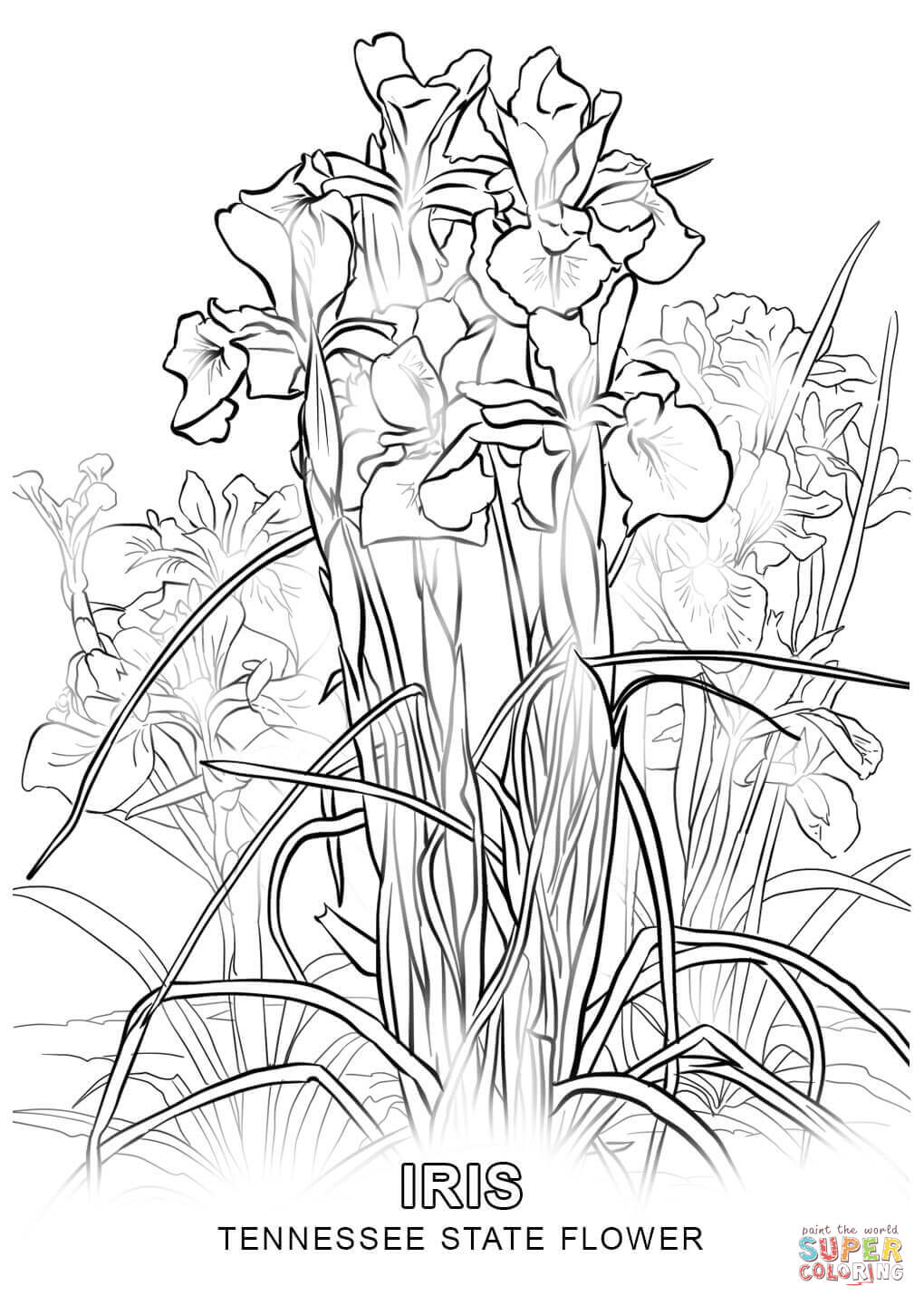 1020x1440 Direct Iris Flower Coloring Page Flowers And A Butterfly Stock